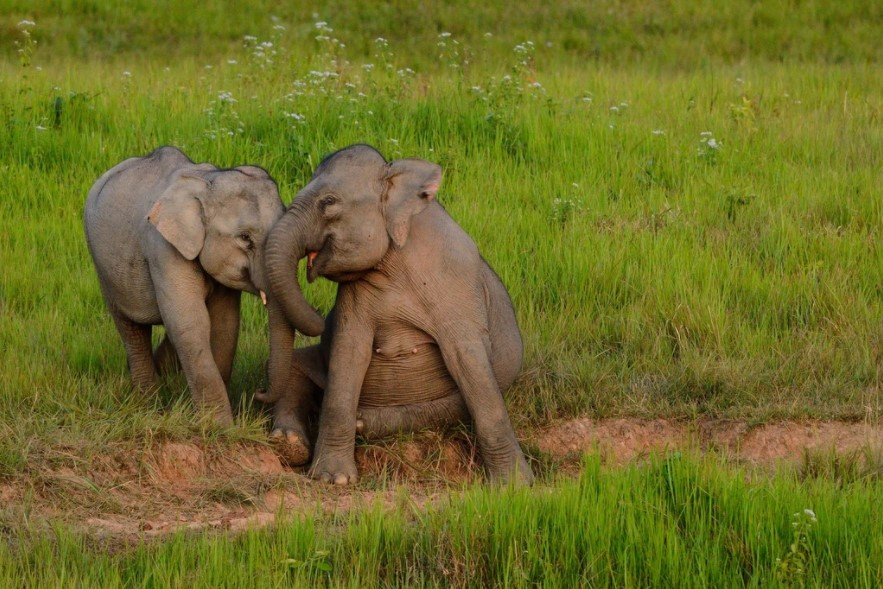 הטבע ופילים בפארק הלאומי קאו יאי תאילנד